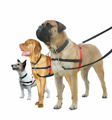 Halti non pull dog harness puppy training control – small,medium,large