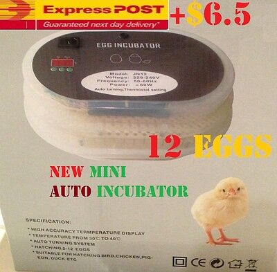 ACCURACY Digital Automatic Mini 12 Eggs Incubator Poultry Turner Thermometer Kit