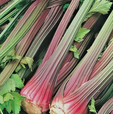 Vegetable Celery Giant red Approx 3000 seeds