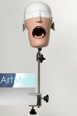Dental Simulator Manikin Phantom Bench Mount + Typodont ARTMED