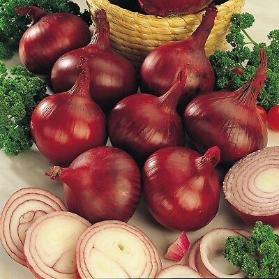 Vegetable Onion Red Baron Appx 300 seeds
