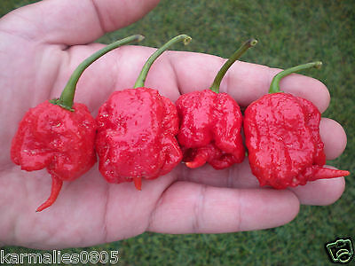 (10) CAROLINA REAPER PEPPER SEEDS  ****World's Hottest Pepper****