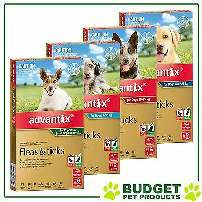 Advantix For Dogs 6 Pack - All Sizes