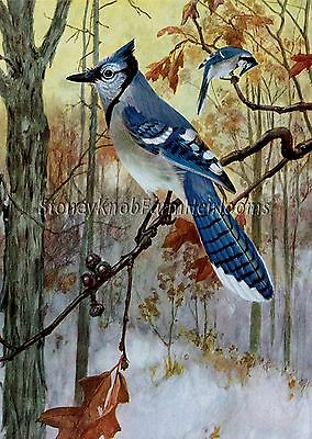 Blue Jays in Winter ~ Birds ~ Counted Cross Stitch Pattern Chart