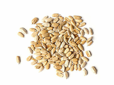 Organic Sunflower Seeds — Raw Kernels,No Shell,Kosher, Bulk — Food to Live