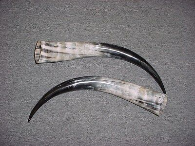"16"" - 20"" Bull Horns Cow Horns STEER LONGHORN horns TAXIDERMY Pairs Polished"