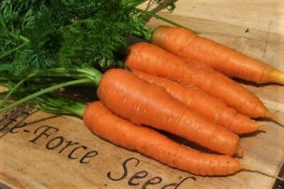 Carrot Nantes (500 seeds)- Organic Heirloom from Life-Force Seeds
