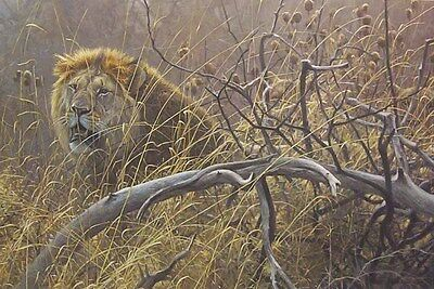 Encounter in the Bush Lion Robert Bateman Limited Edition Print New Sold Out