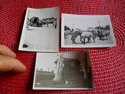 Ancienne Photo Percheron et animaux de la Ménagerie Chameau Elephant + Roulotte