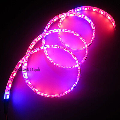 1M 5050 Red Blue 5:1 Plant Grow LED Strip Hydroponic Aquarium + 12V 2A power