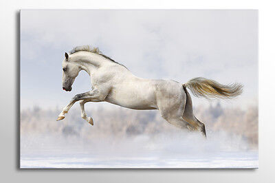 LARGE BOX FRAMED CANVAS WALL ART BLACK /& WHITE HORSE PICTURE STUNNING NEW PRINT