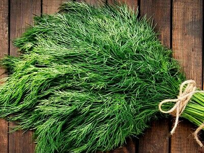 Dill Seeds  (600 Seeds) Heritage Organic from Life-Force Seeds