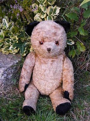 PRETTY OLD 'SOOTY' TEDDY BEAR WITH GLASS EYES 1950SA -1960S SUPERB EXAMPLE