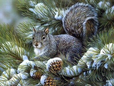 Animals Squirrel looking for nuts Oil Painting HD Print Picture on canvas 16x20