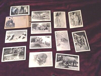 VTG 1942 St. Louis Zoological Board of Control Postcards. Set of 12 Blk/wh