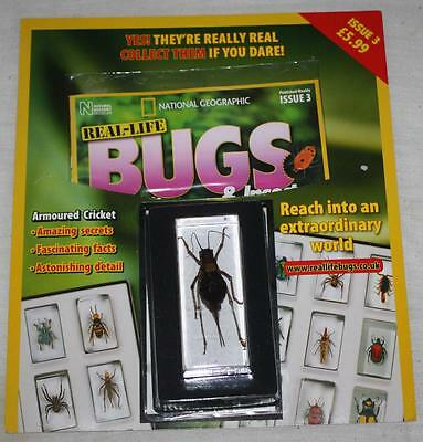 National Geographic Real Life Bugs & Insects Magazine Issue 3 Armoured Cricket