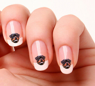 20 Nail Art Stickers Transfers Decals #707 - Rottweiler Dog Peel & Stick