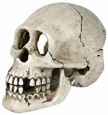 Trixie Aquarium Realistic Human Skull Fish Tank Cave Vivarium Decoration 8713