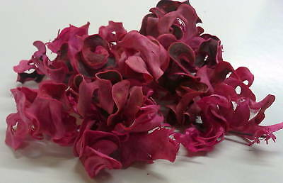 1 KILO  CURLY PODS PINK all COLOR MAKE YOUR OWN POT POURRI 4 BUSINESS & HOME USE