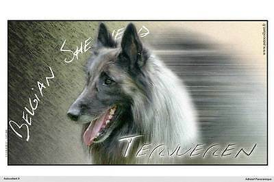 Dogs  sticker 15 cm to 100 cm wide belgian shepherd