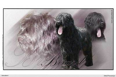 Dogs  sticker 15 cm to 100 cm wide Briard