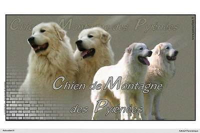Dogs  sticker 15 cm to 100 cm wide Great Pyrenees