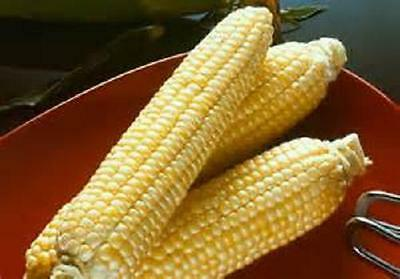 50 Seeds Sugar Buns sweet corn seeds new seeds for 2015 Non-Gmo, Hybrid Seeds