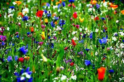 PURE WILD FLOWER MEADOW ACIDIC & CLAY SOILS  PREMIUM SEEDS mix 30 10g to 20kg
