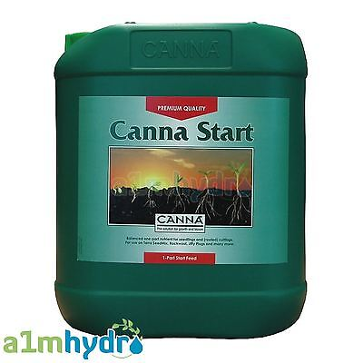 Canna Start All Sizes Young Plants Cuttings Seedlings Hydroponics