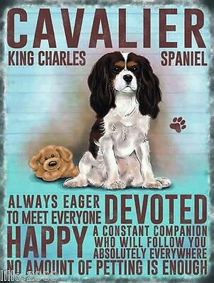 """Cavalier King Charles Spaniel 12""""x 8"""" Medium Metal Sign  With Character Traits"""