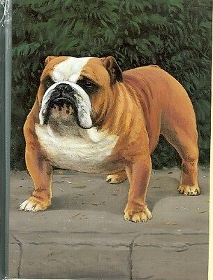 Illustrated Breeds Note Cards (blank) NOS English Bulldog by Michael J. Clark