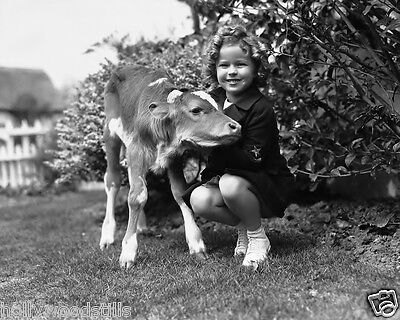 Shirley Temple poses with a calf animal rare movie star 8x10 photo