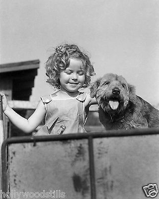 Shirley Temple with cute puppy dog mutt rare 8x10 photo