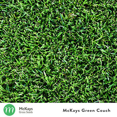 McKays Bermuda/Green Couch Grass Seed Blend - 1kg - Lawn Seed Free Postage