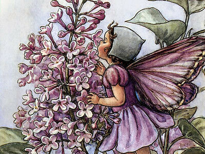 239 Flower Fairies Images On Cd