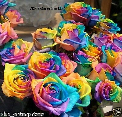 20 Rainbow Roses Seeds Annual Blooms Organically &Harvested Grown In USA Non Gmo