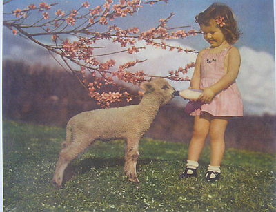 oldfashioned little girl bottle feeding a lamb spring blossoms