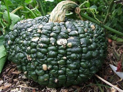 Pumpkin  Australian Ironbark (15seeds)  - Heritage Organic from Life-Force Seeds