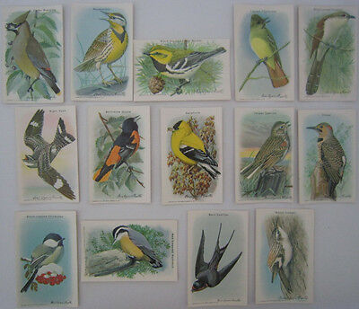 ARM & HAMMER 10th Useful BIRDS of America Complete SERIES 15 Vtg Trading Cards