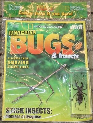 National Geographic Real Life Bugs & Insects Magazine #28 Whip Scorpion