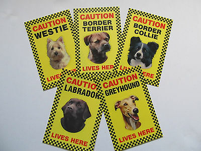 Security Signs-Border Collie-Labrador-Westie-Border Terrier-Greyhound