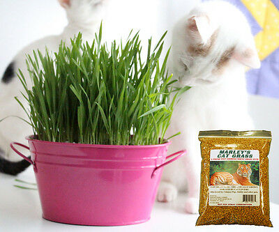 Marley's Cat Grass Seeds, Wheat Grass 1.25 lb 26,728 seeds