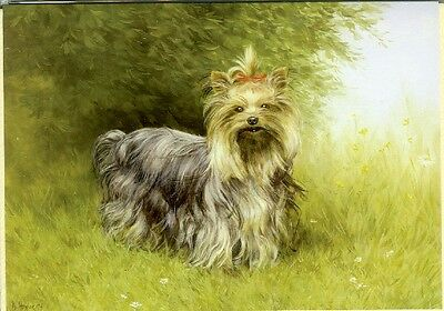 Illustrated Breeds Note Cards (blank) NOS Yorkie Yorkshire Terrier