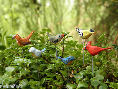 Miniature Dollhouse FAIRY GARDEN ~ Set of 6 TINY Bird Picks Birds ~ NEW