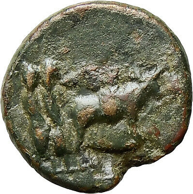 AUGUSTUS Macedon Philippi 27BC Two Colonists with Oxen Authentic Roman Rare