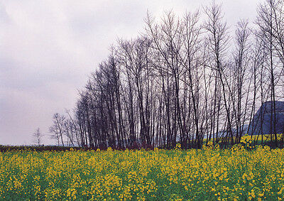 Scenery Countryside Royalty Free 50 Stock Photo in CD