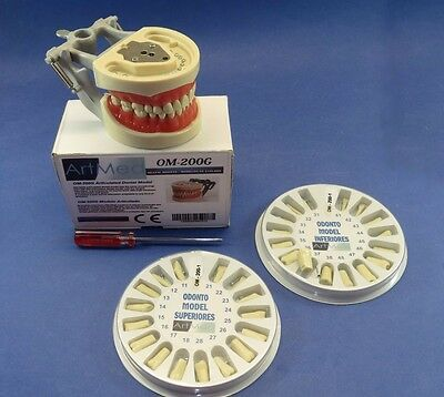Typodont 200G Dental Universal Plate Training Replacement Teeth Upper Lower Kit