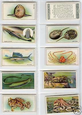 B.A.T  Set 1929 Wonders Of The Sea  Very Good Cond  50