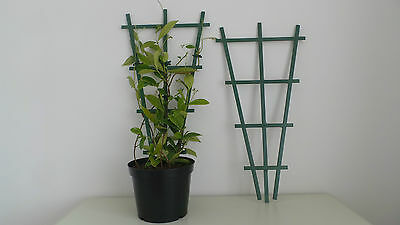Clip On Plastic Plant Pot Top Support Trellis For Climbing Plants 60Cm Tall