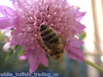 BEE HAPPY 20 WildFlower Seed Mix for bees & butterflies 15 grams = 100s of seeds